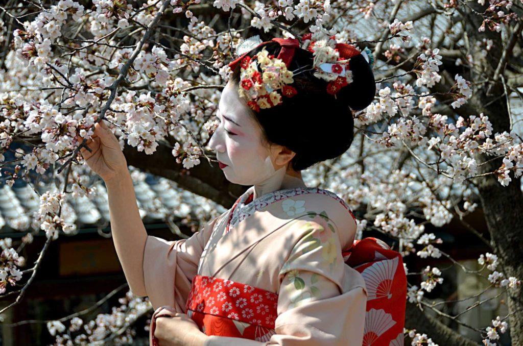 Proba 15. Japonia de după cireși